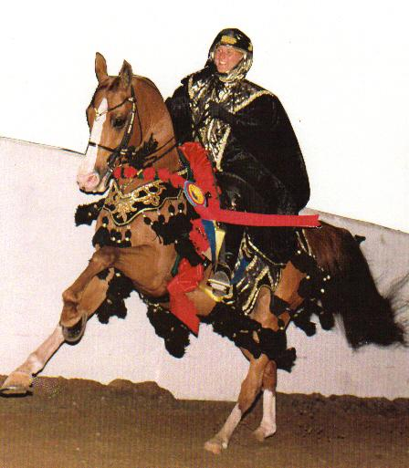 Image Horse Costumes  sc 1 th 240 & Arabian Horse Costumes