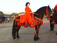 Samurai Warrior Horse Costume made for Friesian horses California & Costumes By Carolyn